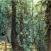Thomas Struth | Yoshemite, 1977-2002